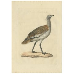 Antique Bird Print of the Great Bustard by Sepp & Nozeman, 1829