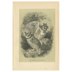 Antique Bird Print of the Great Horned Owl, 1853