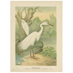 Antique Bird Print of the Great White Egret by Naumann, circa 1895