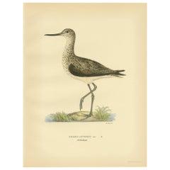 Antique Bird Print of the Greenshank by Von Wright, 1929