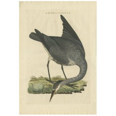 Antique Bird Print of the Grey Heron by Sepp & Nozeman, 1797