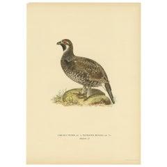 Antique Bird Print of the Hazel Grouse by Von Wright '1927'