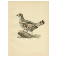 Antique Bird Print of the Hazel Grouse 'Male' by Von Wright, 1929
