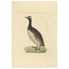 Antique Bird Print of the Horned Grebe by Sepp & Nozeman, 1829