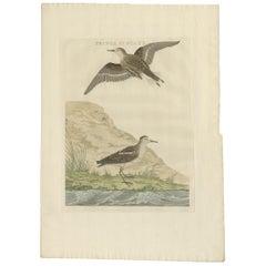 Antique Bird Print of the Little Stint by Sepp & Nozeman, 1797