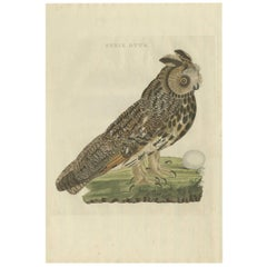 Antique Bird Print of the Long-Eared Owl by Sepp & Nozeman, 1809