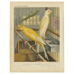 Antique Bird Print of the Manchester or Lancashire Coppies, Grey and Clear
