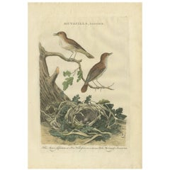 Antique Bird Print of the Nightingale by Sepp & Nozeman, 1789