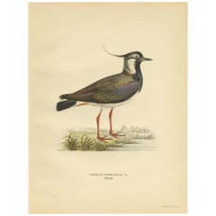 Antique Bird Print of the Northern Lapwing 'Male' by Von Wright, 1929
