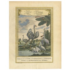 Antique Bird Print of the Ostrich, Pelican, Spatula Bird and Bird of Paradise