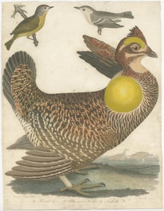Antique Bird Print of the Pinnated Grouse and Warblers by Wilson (c.1820)