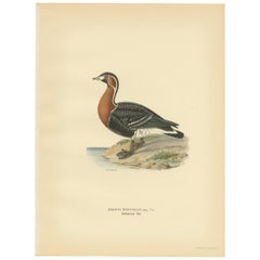 Antique Bird Print of the Red-Breasted Goose by Von Wright '1929'