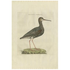 Antique Bird Print of the Spotted Redshank by Sepp & Nozeman, 1797
