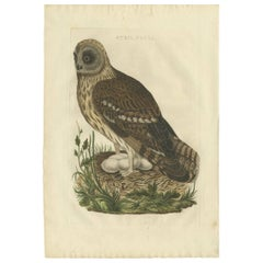 Antique Bird Print of the Strix 'Owl' by Sepp & Nozeman, 1770