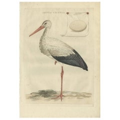 Antique Bird Print of the White Stork by Sepp & Nozeman, 1789