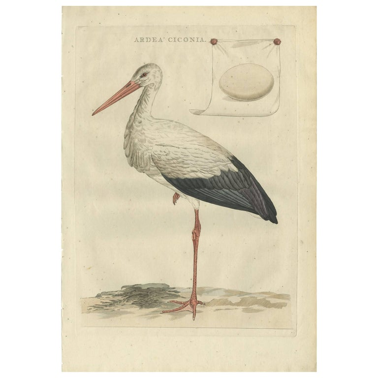Antique Bird Print of the White Stork by Sepp & Nozeman, 1789 For Sale