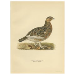 Antique Bird Print of the Willow Ptarmigan 'Male' by Von Wright, 1929