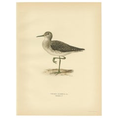 Antique Bird Print of the Wood Sandpiper 'Male' by Von Wright, 1929
