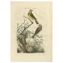 Antique Bird Print of the Yellowhammer by Sepp & Nozeman, 1789