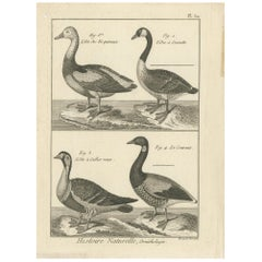 Antique Bird Print of Various Geese by Bonnaterre, '1790'