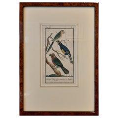 Antique Bird Print of Various Parrot Species by Buffon, 1787