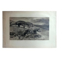 Antique Black and White Etching with Tigers by Herbert Dicksee, the Destroyers