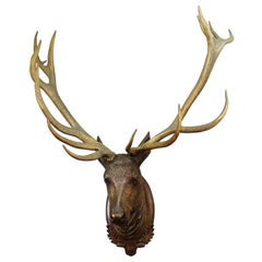 Antique Black Forest Carved Stag Head with Large Antlers, ca. 1900