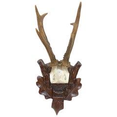 Antique Black Forest Deer Antler Trophy on Wood Carved Plaque, Austria, 1890s
