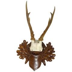 Antique Black Forest Deer Antler Trophy on Wood Carved Plaque, Germany, 1922