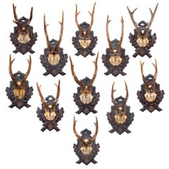 Antique Black Forest Roe Trophies of Leopold I of Belgium