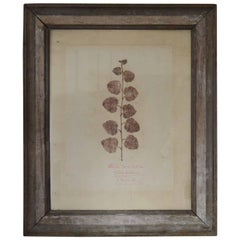 Antique Botanical Print, Scottish, circa 1830.