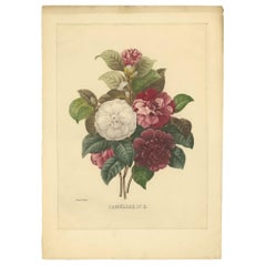 Antique Botany Print of a Bouquet of Camellia Flowers Made after P.J. Redouté