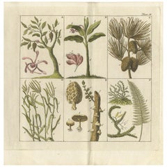 Antique Botany Print of Various Trees, Mushrooms and Ferns '1808'