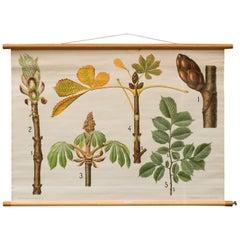 "Antique Danish School, Teaching Chart, Poster ""Fagaceae"""