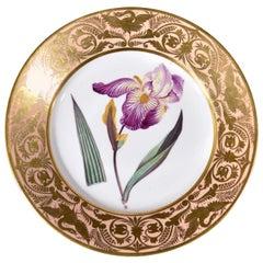 Antique Derby Porcelain Plate, Elder Scented Iris, after William Curtis