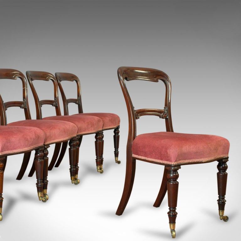 This is an antique dining chair suite. An English, walnut set of 5 chairs by Gillows of Lancaster and dating to the Victorian period, circa 1850.
