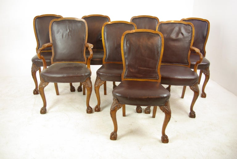 Amazing Antique Dining Chairs Walnut Leather Seats Scotland 1930 Cjindustries Chair Design For Home Cjindustriesco