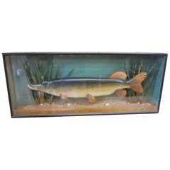 Antique English decorative Carved Wood fish , A Pike in Case, circa 1924