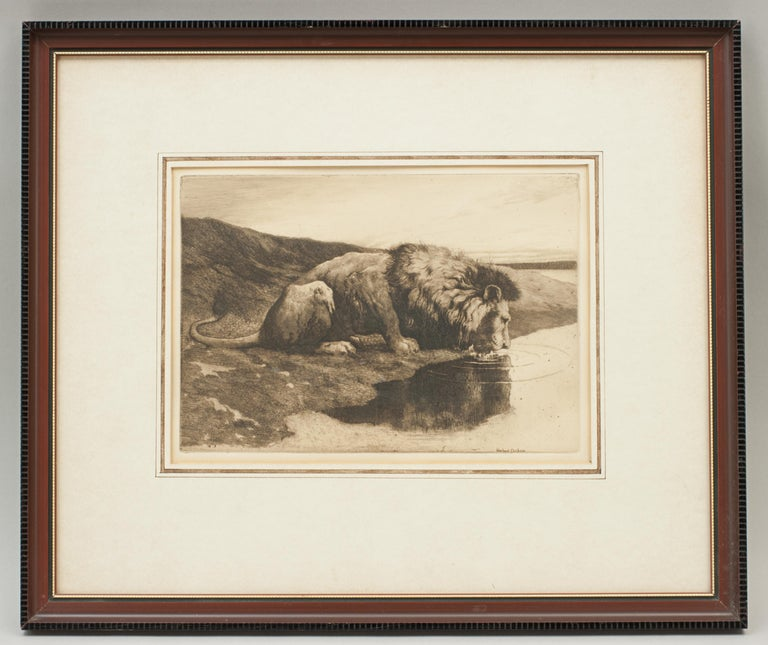 Herbert Dicksee 'A Drinking Lion'. A wonderful original sepia toned etching of a lion drinking from the river by Herbert Dicksee. In a glazed frame with framers paper label on the back. A great image by Dicksee, the etching with printed signature