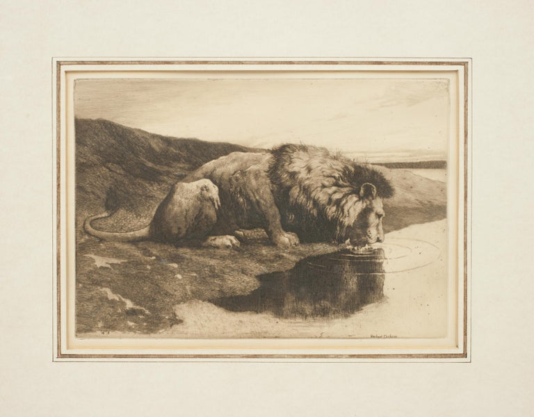 Sporting Art Antique Etching by Herbert Dicksee 'A Drinking Lion' For Sale