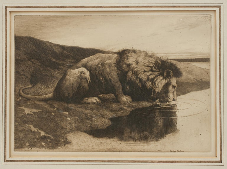 British Antique Etching by Herbert Dicksee 'A Drinking Lion' For Sale