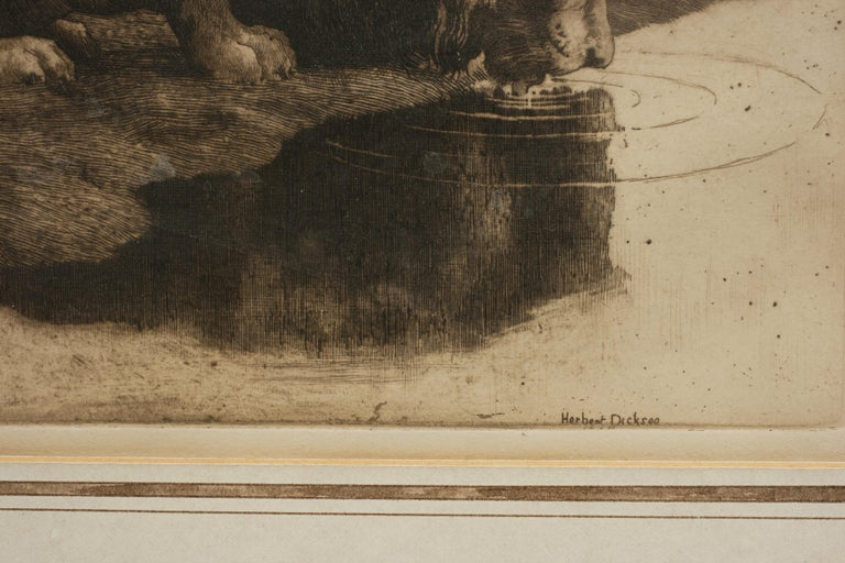 Antique Etching by Herbert Dicksee 'A Drinking Lion' In Good Condition For Sale In Oxfordshire, GB
