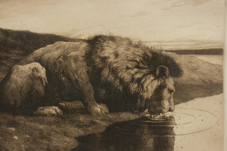 Early 20th Century Antique Etching by Herbert Dicksee 'A Drinking Lion' For Sale