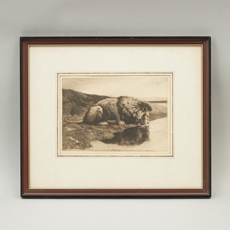 Antique Etching by Herbert Dicksee 'A Drinking Lion' For Sale 2