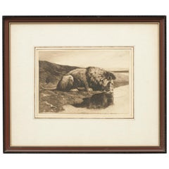 Antique Etching by Herbert Dicksee 'A Drinking Lion'