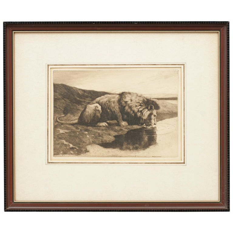 Antique Etching by Herbert Dicksee 'A Drinking Lion' For Sale