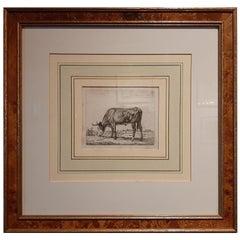 Antique Etching of a Grazing Cow by Van Troostwijk, 1810