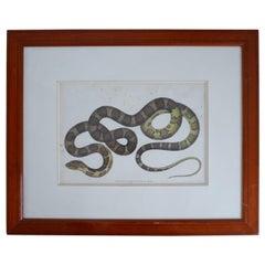 Antique Framed Snake Print 'No.2'
