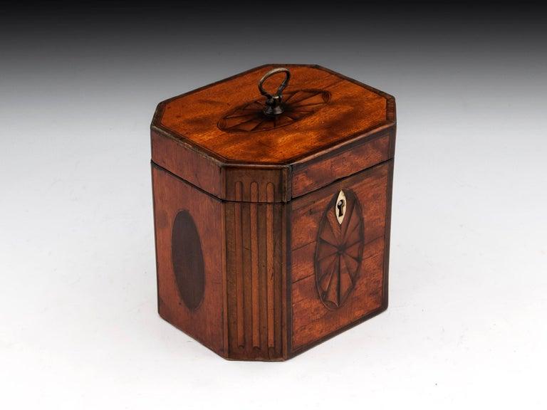 British Antique Georgian Satinwood Burr Yew Tea Caddy For Sale