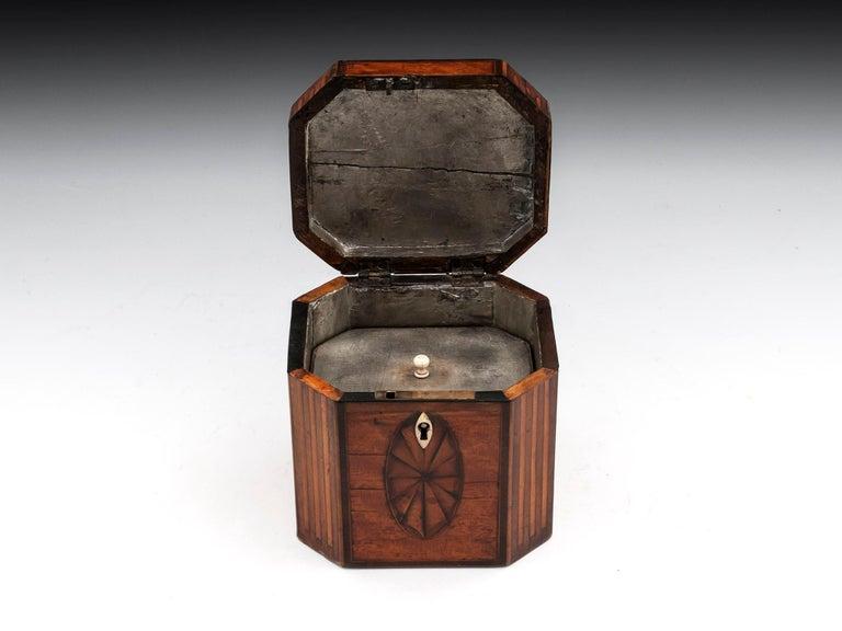 19th Century Antique Georgian Satinwood Burr Yew Tea Caddy For Sale